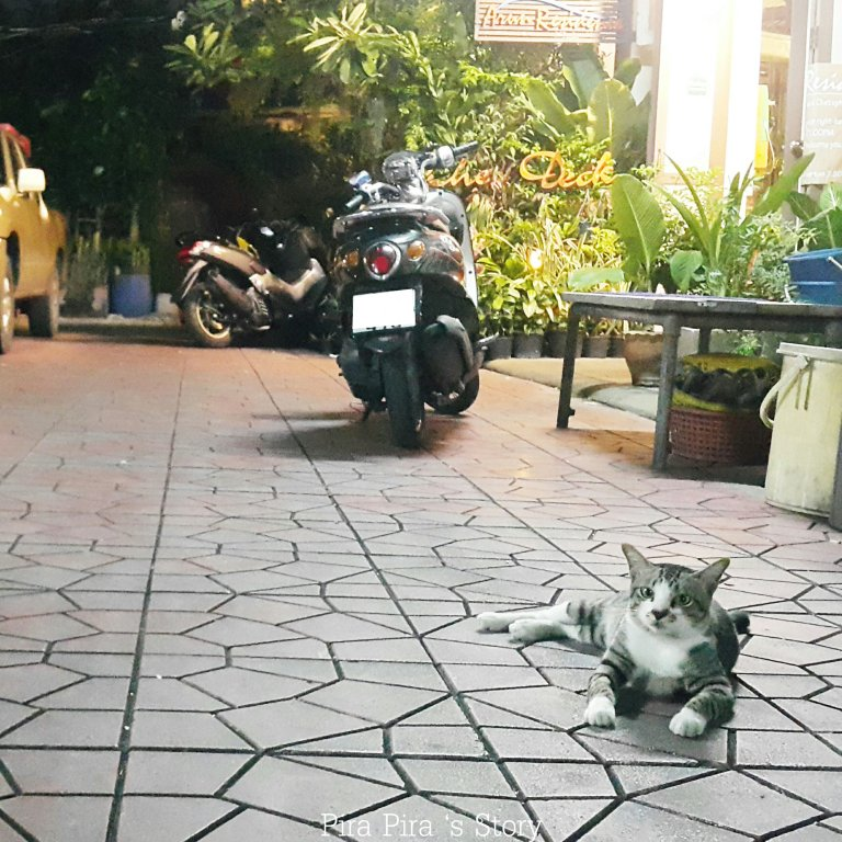 thatien xing tak lak cat bangkok-1127279938..jpg