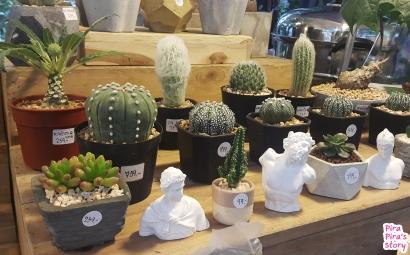 Greenery Market siam discovery pira pira story cactus