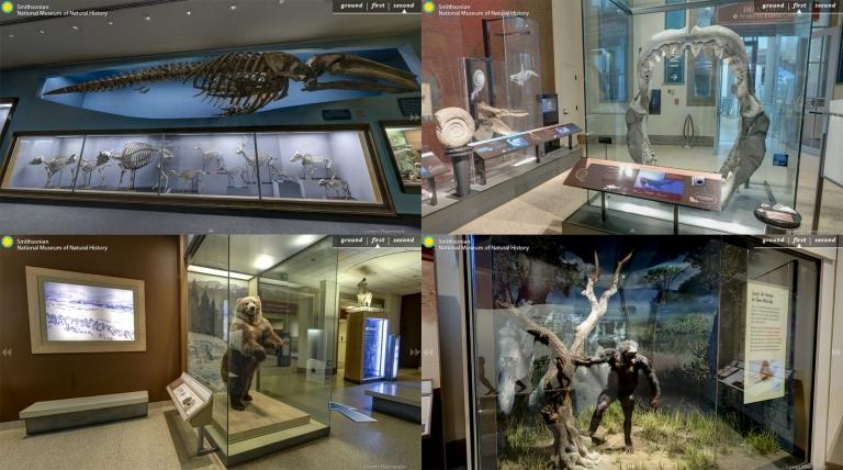 พิพิธภัณฑ์ ธรรมชาติวิทยาแห่งชาติ สมิธโซเนียน Smithsonian National Museum of Natural History virtual