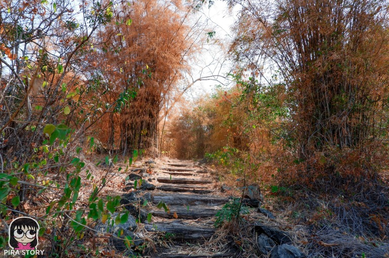 ป่าไผ่ ต้นไผ่