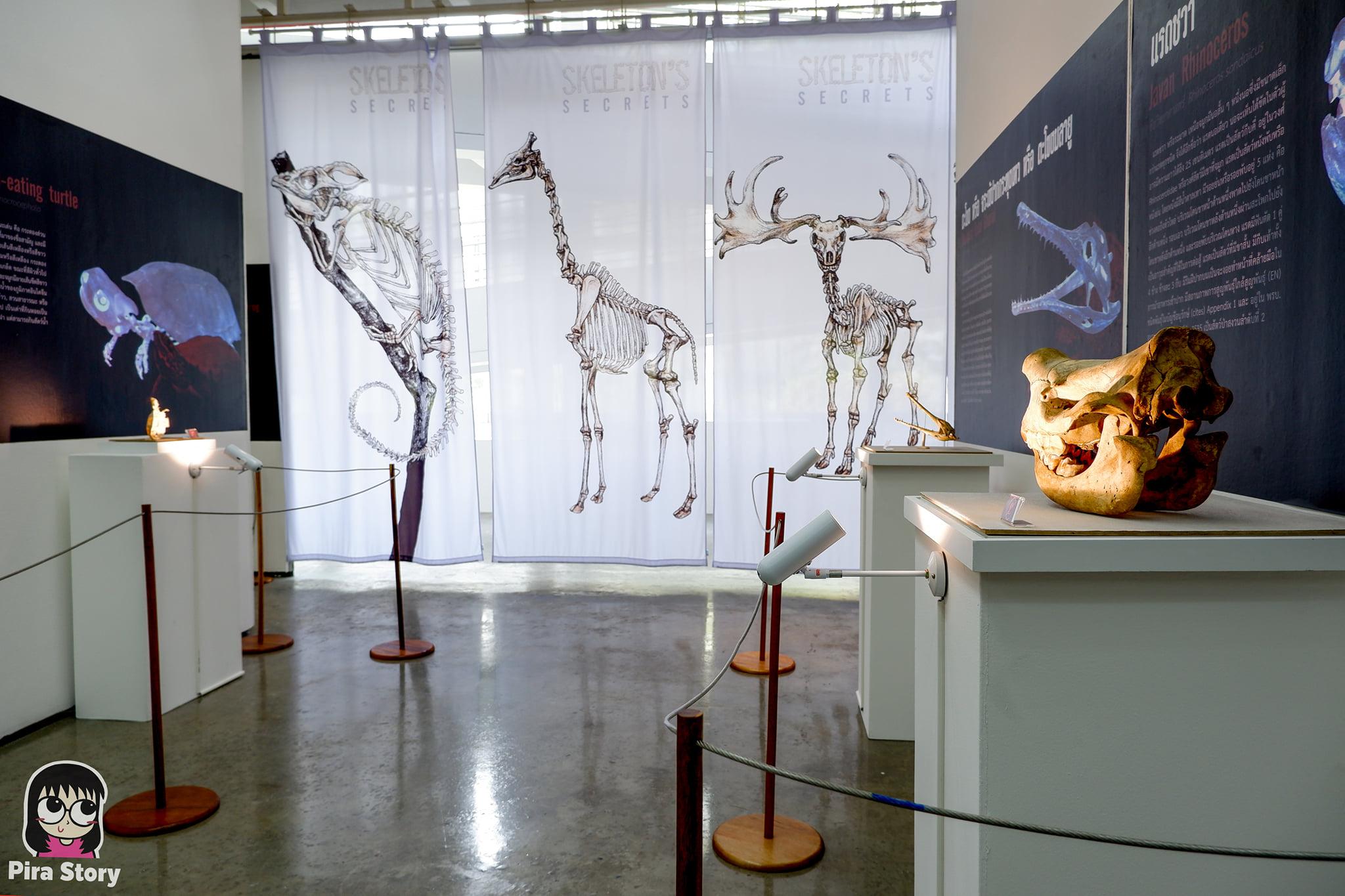 ความลับของโครงกระดูก Skeleton's Secrets ศึกษากายวิภาคสัตว์ ที่พิพิธภัณฑ์ จุฬาลงกรณ์มหาวิทยาลัย คณะวิทยาศาสตร์ ชีววิทยา Night at the museum 2020 เที่ยวพิพิธภัณฑ์ เที่ยวกรุงเทพ สยาม กระดูกสัตว์ กายวิภาคศาสตร์ โครงสร้างร่างกาย โครงสร้างกระดูก สัตว์เลี้ยงลูกด้วยนม สัตว์มีกระดูกสันหลัง